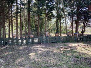Beehives at Farnborough North