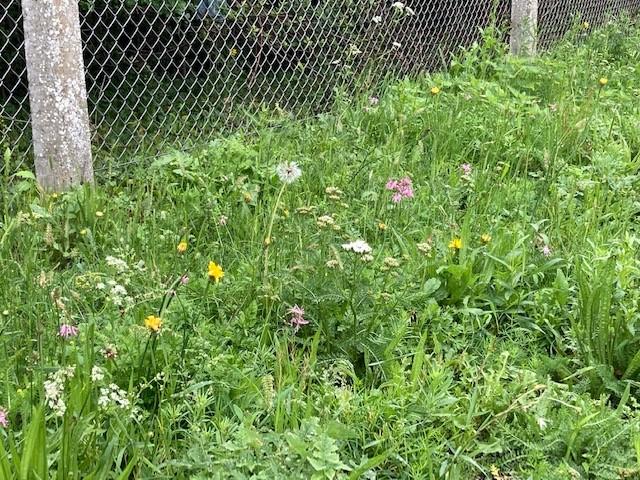 Edenbridge Town station wildflower planting