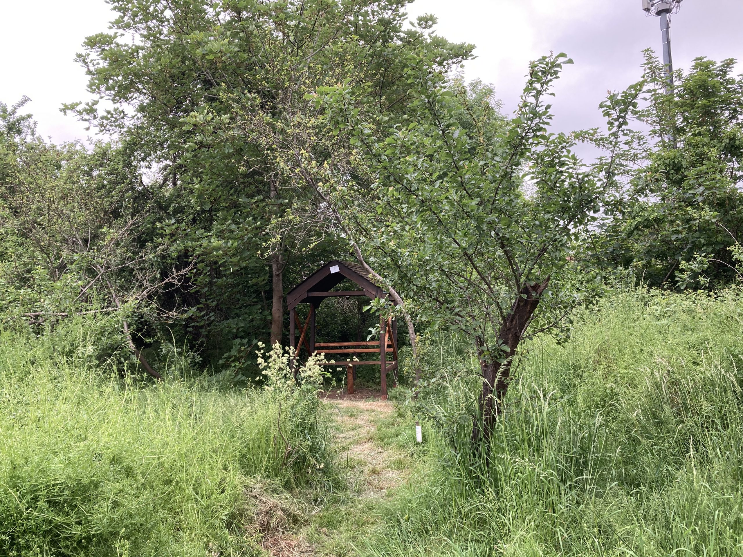 Shalford Orchard
